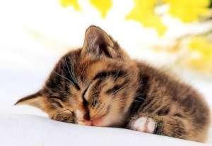 妙鲜包对猫的好处